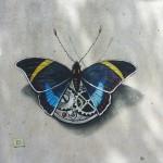 Euphaedra mechanicus